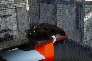 Cat Boarding FAQ - Cubbins Cattery