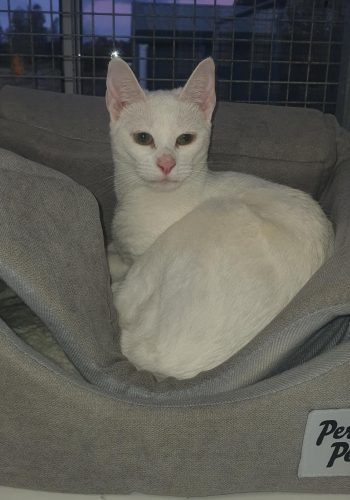 Port Stephens Cat Boarding - Cubbins Cattery