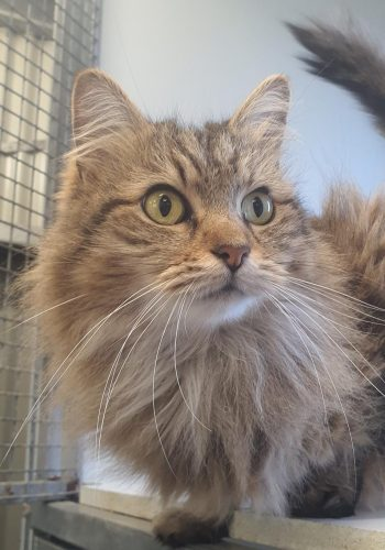 Special Needs Cat Boarding - Cubbins Cattery